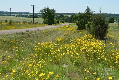 Photograph - Texas Roadside Wildflowers by Catherine Sherman