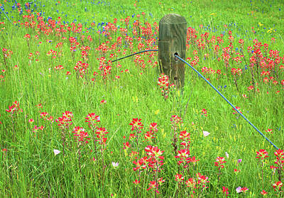 Poppies Photograph - Texas Roadside Wonders 3 by Lynn Bauer