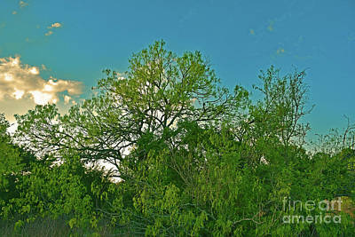 Photograph - Texas Rural - Buda Area  by Ray Shrewsberry