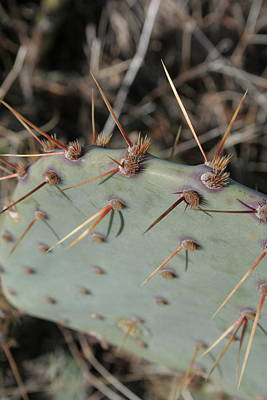 Art Print featuring the photograph Texas Spikes by Laddie Halupa