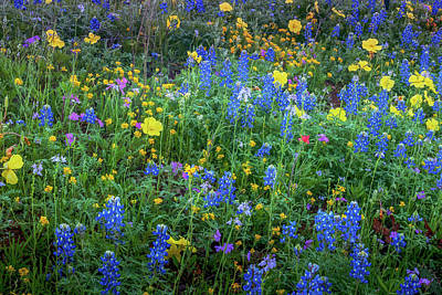 Photograph - Texas Spring Pallette by Thomas Pettengill