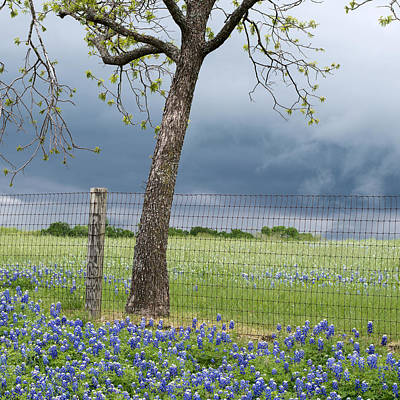 Photograph - Texas Spring Storm by Rospotte Photography