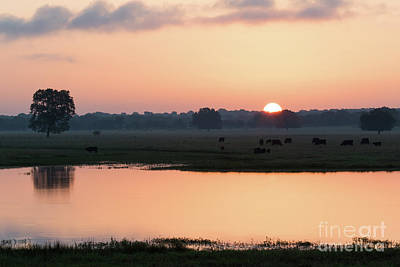 Photograph - Texas Sunrise by Vincent Bonafede