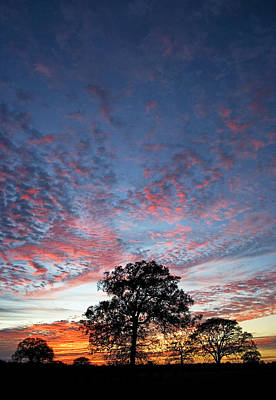 Photograph - Texas Sunset by Skip Hunt