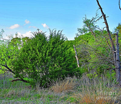 Photograph - Texas Untamed Rural by Ray Shrewsberry