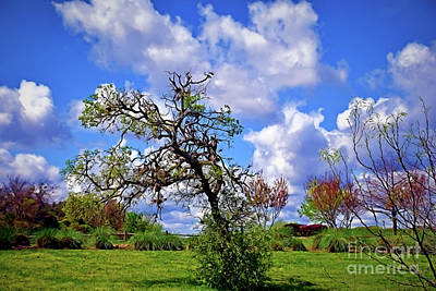 Photograph - Texas View 1-15 by Ray Shrewsberry