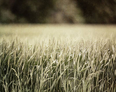 Texas Wheat Field Landscape Art Print by Lisa Russo