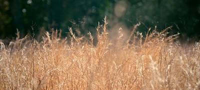 Photograph - Texas Wheat Fields by Mozelle Beigel Martin