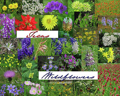 Photograph - Texas Wildflower Collage by Robyn Stacey