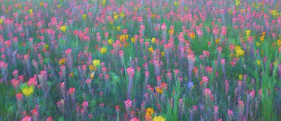 Robert Bellomy Royalty-Free and Rights-Managed Images - Texas Wildflowers Abstract by Robert Bellomy