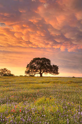 Mammatus Cloud Photograph - Texas Wildflowers After The Storm 2 by Rob Greebon
