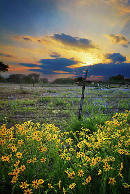 Photograph - Texas Wildflowers At Sunset  by Lynn Bauer