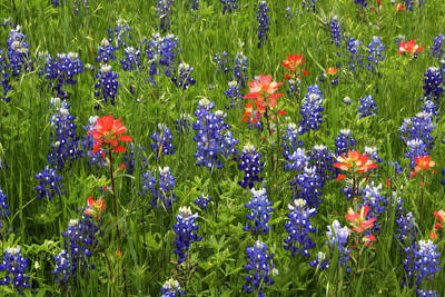 Photograph - Texas Wildflowers by David and Carol Kelly
