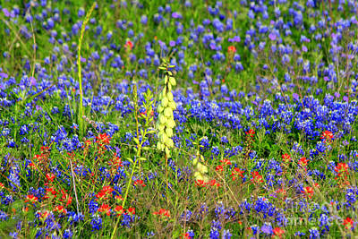 Photograph - Texas Wildflowers by Kathy White