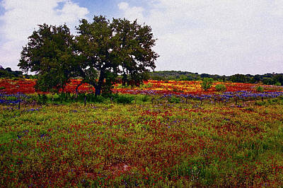 Photograph - Texas Wildflowers by Tamyra Ayles