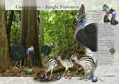 Painting - Text Example For Interpetive Zoo Panel Cassowaries In Their Habitat  - Nature Interpretation by Urft Valley Art