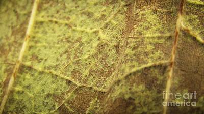 Photograph - Texture 1 by Robert Knight