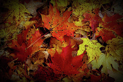 Photograph - Texture Drama Autumn Leaves by Aimee L Maher ALM GALLERY