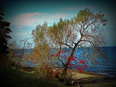 Photograph - Texture Drama Beach Tree by Aimee L Maher Photography and Art Visit ALMGallerydotcom