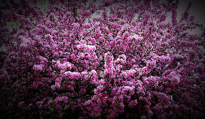 Photograph - Texture Drama Crab Apple Tree by Aimee L Maher ALM GALLERY