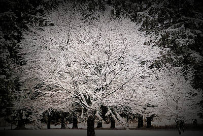Photograph - Texture Drama Essence Of Winter by Aimee L Maher ALM GALLERY