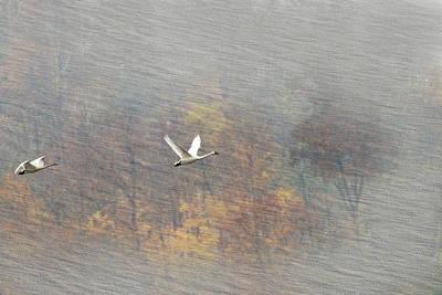 Photograph - Textured Birds In Flight by Dan Friend