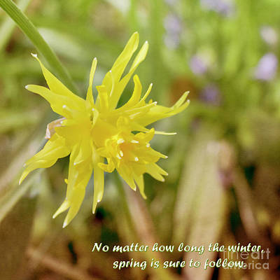 Photograph - Textured Daffodil With Text by Terri Waters