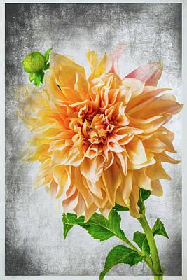 Photograph - Textured Dahlia Beauty by Garry Gay