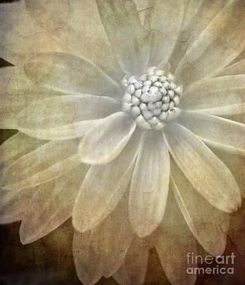White Flower Photograph - Textured Dahlia by Meirion Matthias