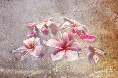 Photograph - Textured Frangipani by Michelle Meenawong