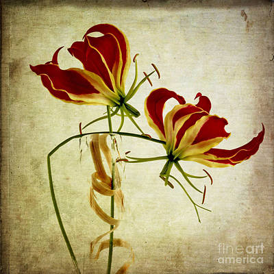 Textured Gloriosa Lily. Art Print by Bernard Jaubert