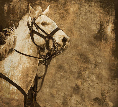 Photograph - Textured Horse by Kim Henderson