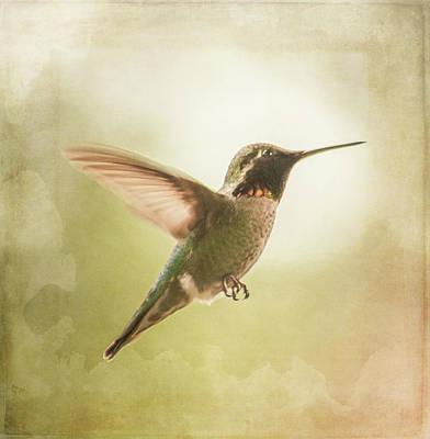 Photograph - Hummingbird In Flight - Textured by Marilyn Wilson