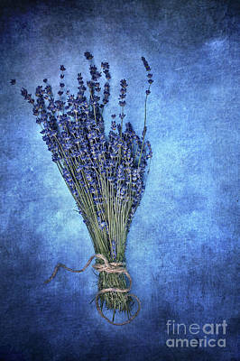 On Paper Photograph - Textured Lavender  by Stephanie Frey