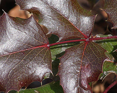 Print featuring the photograph Textured Leaves by Doris Potter