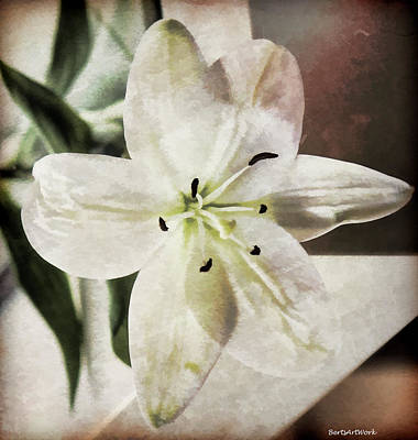 Photograph - Textured Lily by Roberta Byram