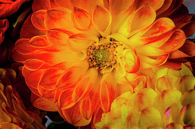 Photograph - Textured Lovely Dahlia In Red And Yellow by Garry Gay