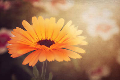 Textured Marigold Art Print by Carol Japp