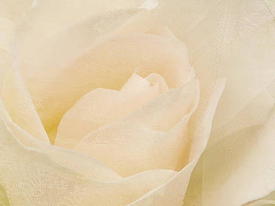 Photograph - Textured Pastel Rose by Blair Wainman