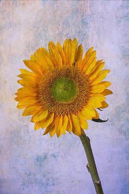 Photograph - Textured Sunflower by Garry Gay