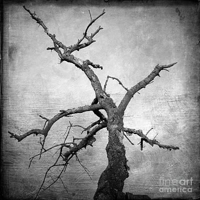 Barren Digital Art - Textured Tree by Bernard Jaubert