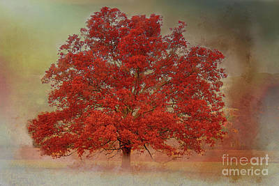 Photograph - Textured Tree by Geraldine DeBoer