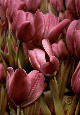 Photograph - Textured Tulips by Jessica Jenney
