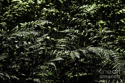 Ferns Photograph - Textures Of A Rainforest by Jorgo Photography - Wall Art Gallery