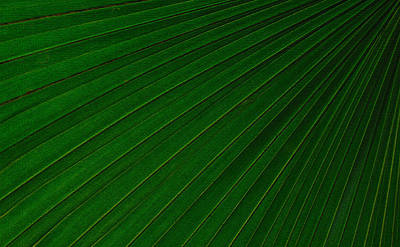 Photograph - Texturized Palm Leaf by Tikvah's Hope
