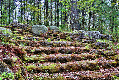 Photograph - The Mossy Way by Mike Smale