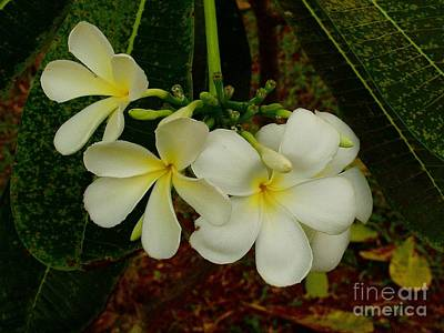 Photograph - Thai Flowers II by Louise Fahy