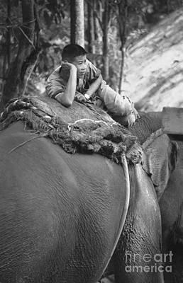 Photograph - Thailand Elephant Man by Mary-Lee Sanders