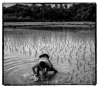 Photograph - Thailand Rice Planting by David Longstreath