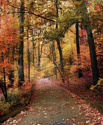 Photograph - Thain Forest Trail by Jessica Jenney